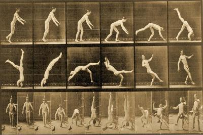 Plate from 'Animal Locomotion' Series, C.1887-Eadweard Muybridge-Giclee Print