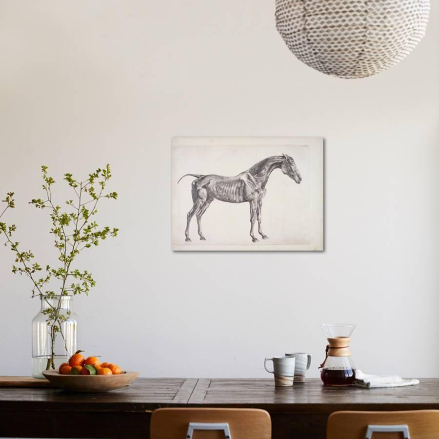 Plate From The Anatomy Of The Horse C1766 Giclee Print By George