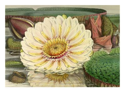 Plate III-Walter Hood Fitch-Giclee Print