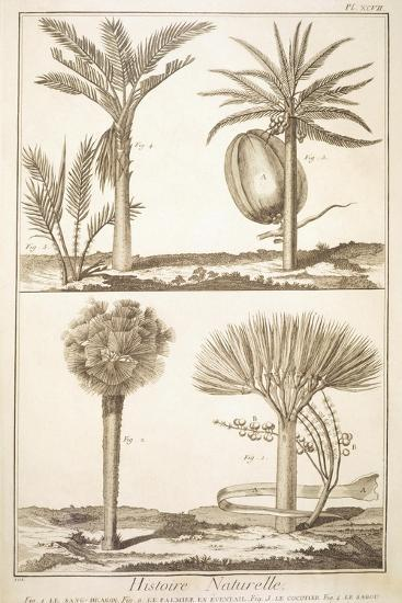 Plate Showing Palm Tree Types: Dragon's Blood--Giclee Print