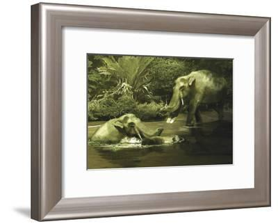 Platybelodon Grazing on Water, Weeds and Plants from the Miocene Epoch-Stocktrek Images-Framed Art Print