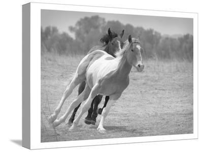 Playful Pals #6 Bw-Murray Bolesta-Stretched Canvas Print