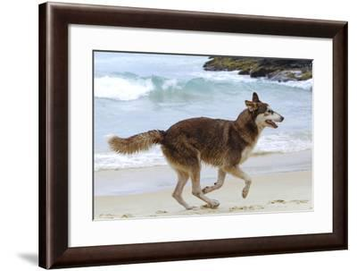 Playing on the Beach--Framed Photographic Print
