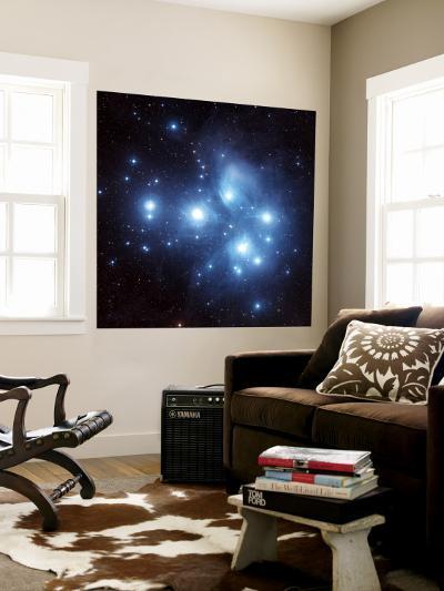 Pleiades Star Cluster--Wall Mural