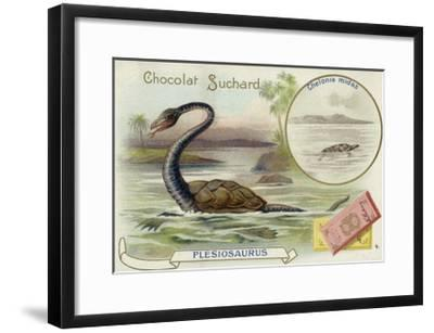 Plesiosaur and Green Sea Turtle--Framed Giclee Print