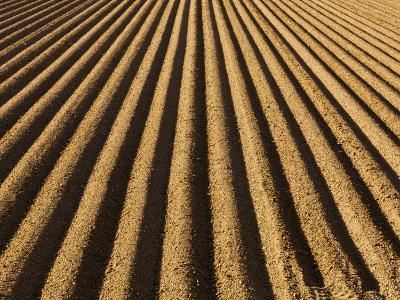 Ploughed Field-Douglas Steakley-Photographic Print