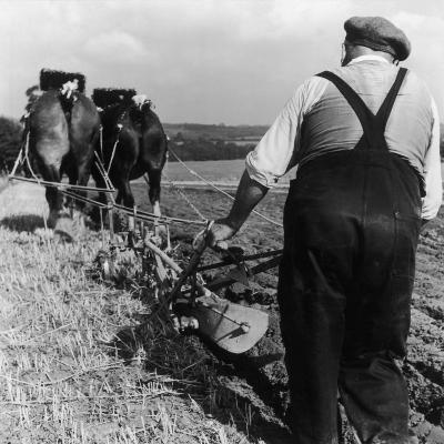 Ploughing Contest 1950s-Henry Grant-Photographic Print