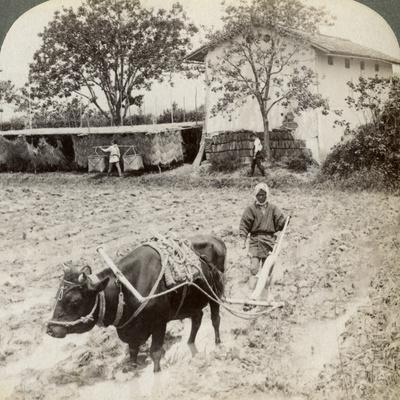 https://imgc.artprintimages.com/img/print/ploughing-flooded-ground-for-rice-planting-north-of-the-main-road-at-uji-near-kyoto-japan-1904_u-l-q10lxia0.jpg?p=0