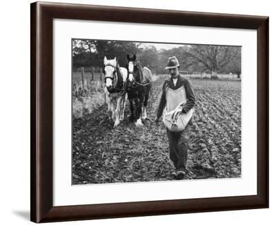 Ploughing in the Seed after Hand Sowing on a Farm in Ireland--Framed Photographic Print