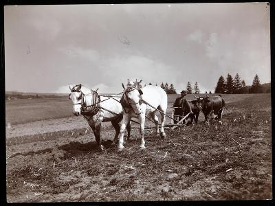 Ploughing on the Property of Alton Brooks Parker, Esopus Creek, New York, 1904-Byron Company-Giclee Print