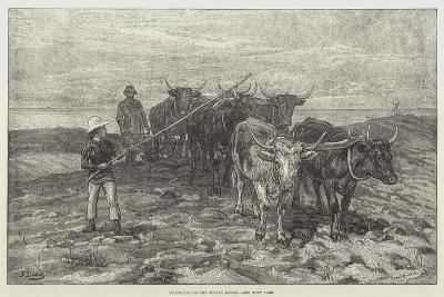 Ploughing on the Sussex Downs-Frank Dadd-Giclee Print