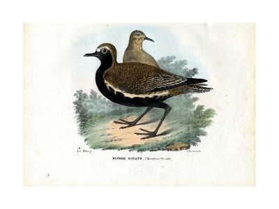 Plover, 1863-79-Raimundo Petraroja-Giclee Print