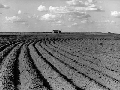 Plowed Fields on a Mechanized Cotton Farm--Photographic Print