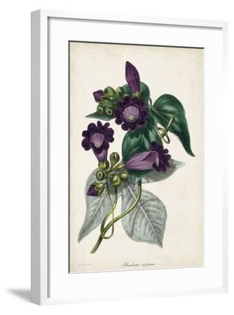 Plum Foxgloves-Paxton-Framed Giclee Print