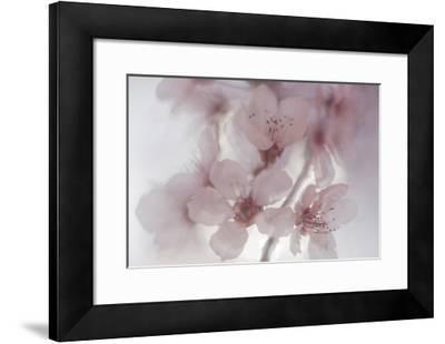 Plum Impressions II-William Neill-Framed Giclee Print