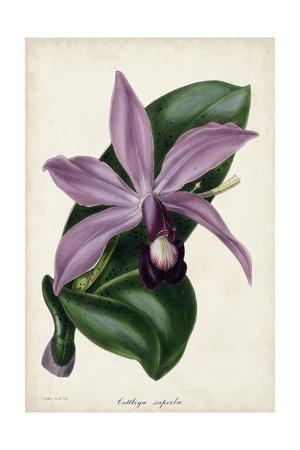 https://imgc.artprintimages.com/img/print/plum-orchid_u-l-q11k46n0.jpg?p=0