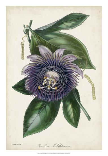 Plum Passion Flower-Paxton-Giclee Print