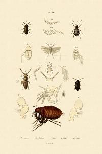 Plume Moth, 1833-39