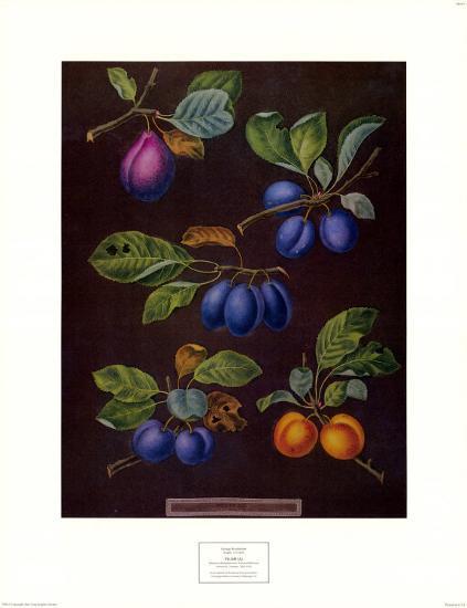 Plums I-George Brookshaw-Art Print