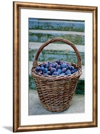 Plums in a basket, Southern Bohemia, Czech Republic--Framed Photographic Print