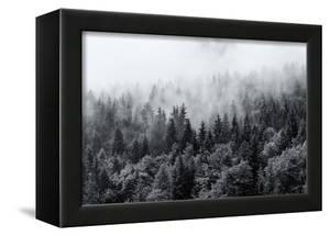 Misty Forests of Evergreen Coniferous Trees in an Ethereal Landscape with Low Laying Mist or Cloud by PlusONE