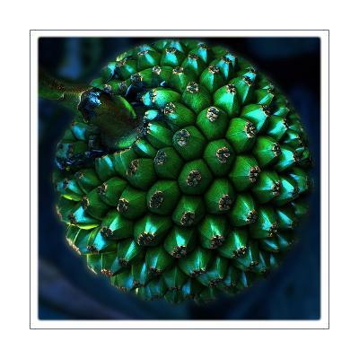 Pod of Seeds-Harold Silverman-Giclee Print