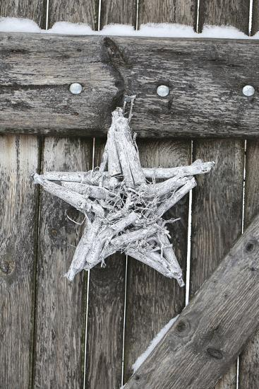 Poinsettia and Age Wooden Gate-Andrea Haase-Photographic Print