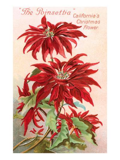 Poinsettias, California Christmas Flower--Art Print