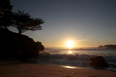 Point Lobos State Reserve, California-Dan Schreiber-Photographic Print