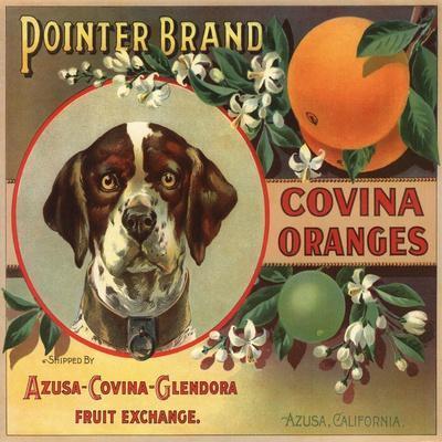 https://imgc.artprintimages.com/img/print/pointer-brand-azusa-california-citrus-crate-label_u-l-q1grglh0.jpg?p=0