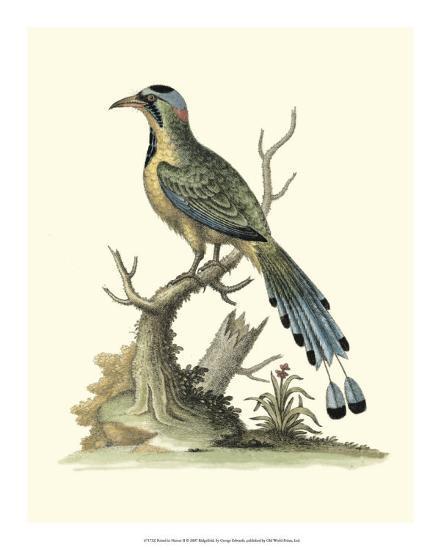 Poised in Nature II-George Edwards-Giclee Print