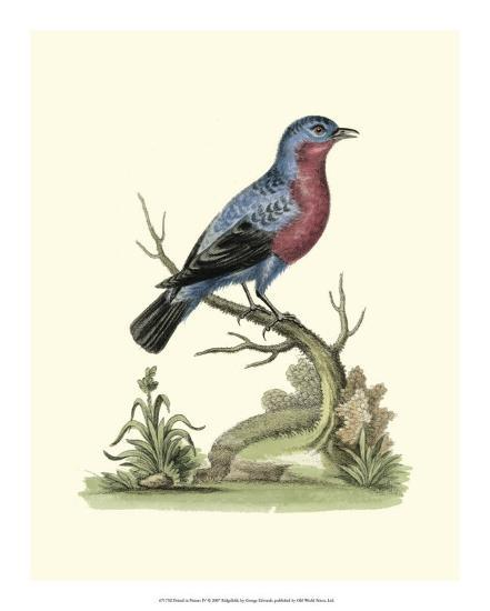 Poised in Nature IV-George Edwards-Giclee Print