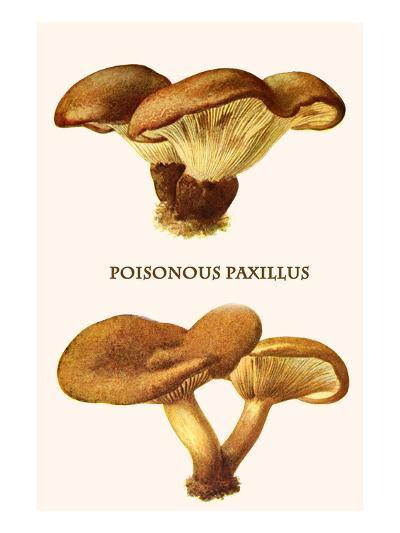 Poisonous Paxillus-Edmund Michael-Art Print