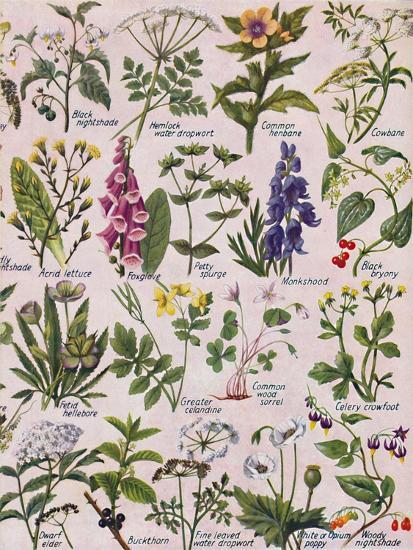 'Poisonous Plants Found in the British Isles', 1935-Unknown-Giclee Print