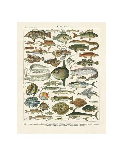 Poissons I-Adolphe Millot-Art Print