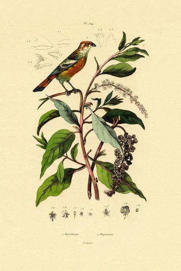 Pokeweed, 1833-39--Giclee Print