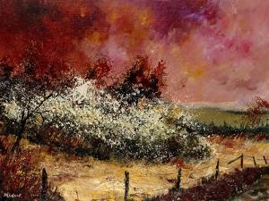 Hawthorn in blossom by Pol Ledent