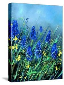 Muscari by Pol Ledent