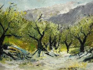 Olivetrees by Pol Ledent