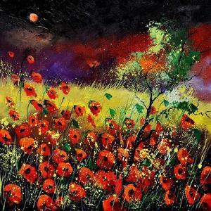 Poppies 7741 by Pol Ledent