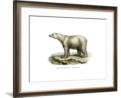 Polar Bear, 1860--Framed Giclee Print