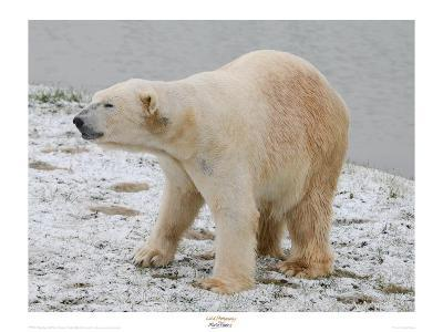 Polar Bear after the Bath-Martin Fowkes-Giclee Print