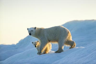 Polar Bear and Cub Walking on Sea Ice at Sunset Near Harbor Islands,Canada-Paul Souders-Photographic Print