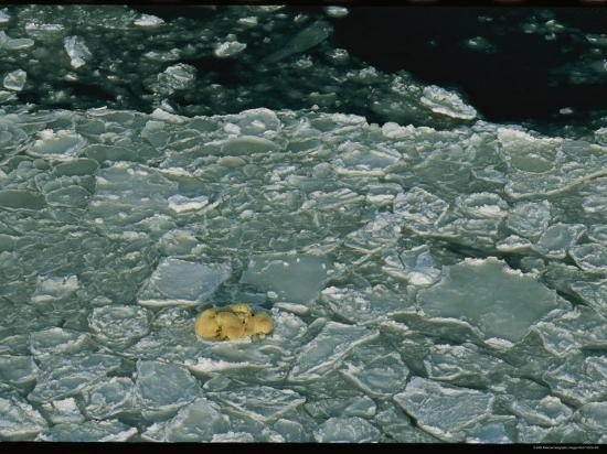 Polar Bear Mother and Cubs Resting on Cracked and Broken Sea Ice-Norbert Rosing-Photographic Print