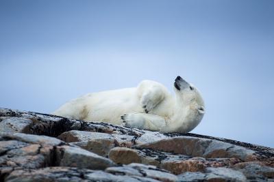 Polar Bear on Harbour Islands, Hudson Bay, Nunavut, Canada-Paul Souders-Photographic Print