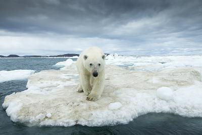 Polar Bear on Hudson Bay Pack Ice, Nunavut, Canada-Paul Souders-Photographic Print