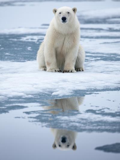 Polar Bear on ice-Paul Souders-Photographic Print