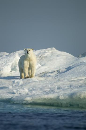 Polar Bear on Iceberg, Hudson Bay, Nunavut, Canada-Paul Souders-Photographic Print