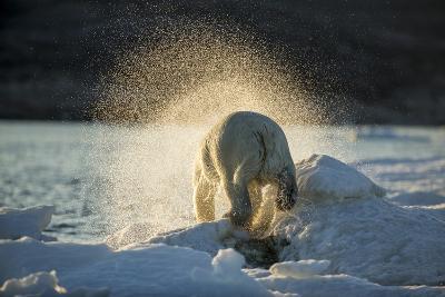 Polar Bear on Iceberg in Hudson Bay, Nunavut, Canada-Paul Souders-Photographic Print