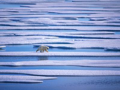 Polar Bear on Pack Ice-Hans Strand-Photographic Print
